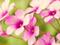 عکس گلهای بهاری
