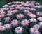 تصویر گل ها
