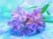 والپیپر گل یاس ارغوانی