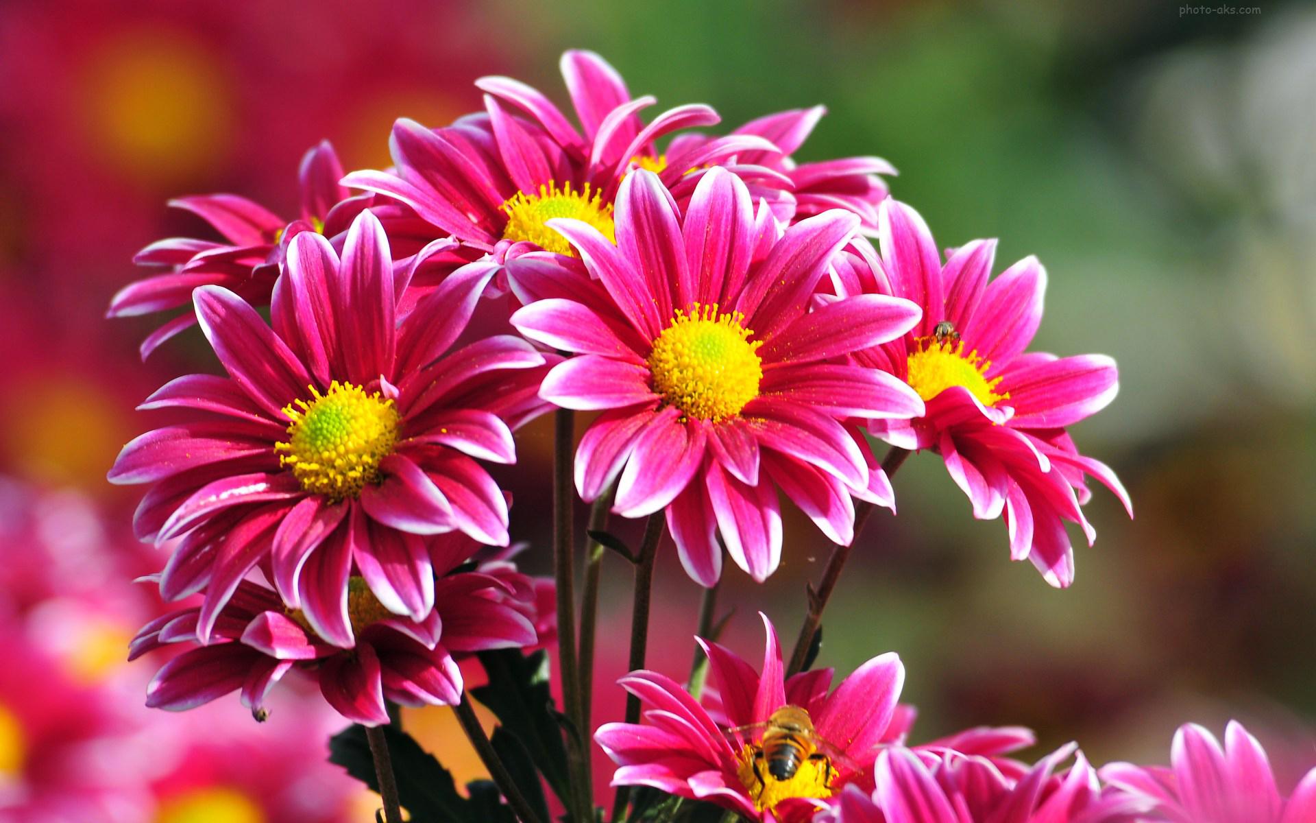 طبیعت - گل ها - سایر گل ها