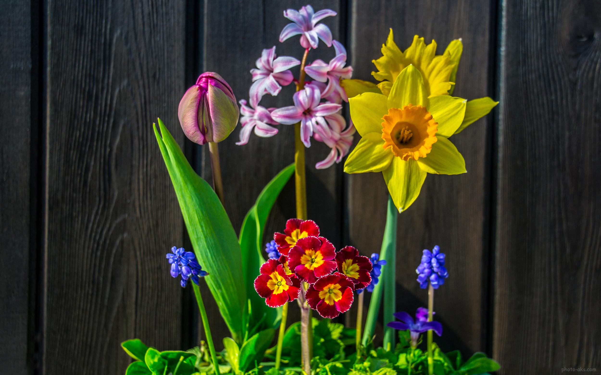 flowers_picture.jpg