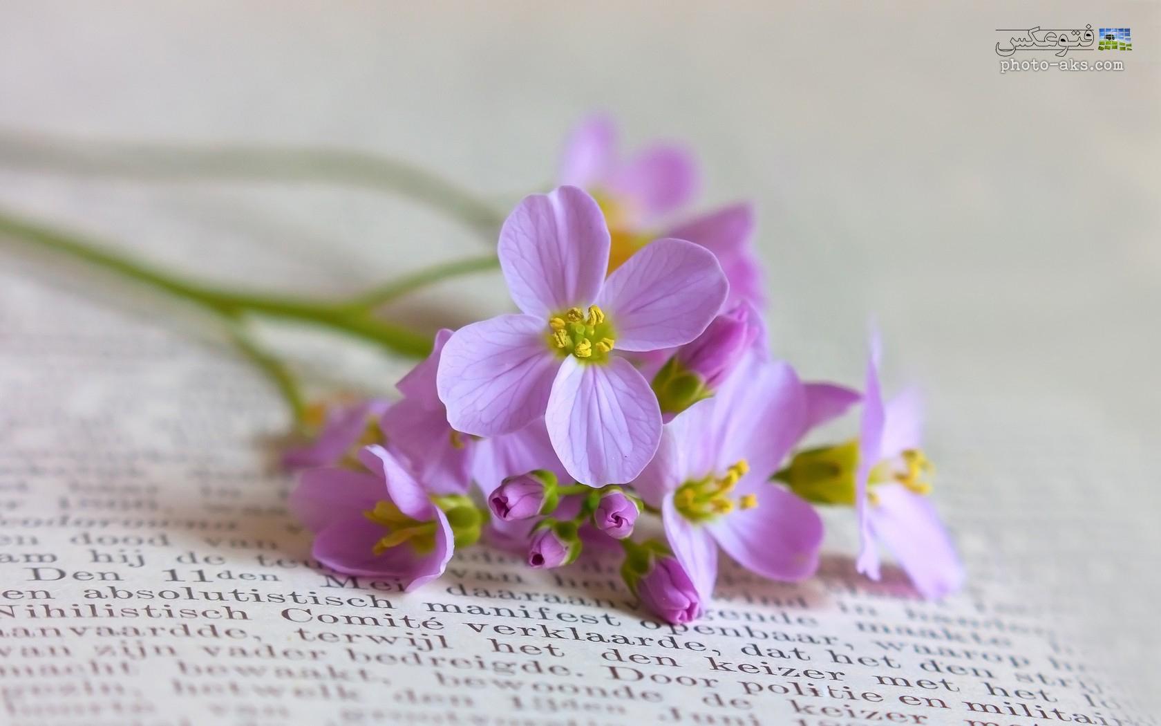 pink-light-flowers.jpg