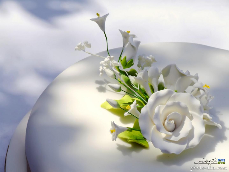 عکس+گل+یاسمین