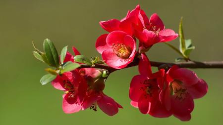 گلبرگ گلهای بهاری صورتی flowers pink petals