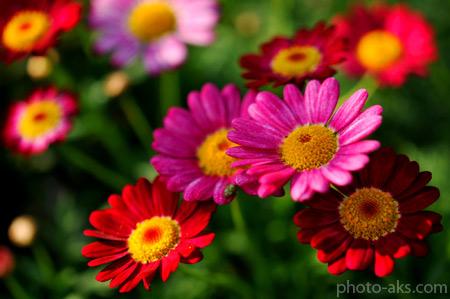 عکس+گل+خوشگل