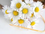 عکس دسته گل بابونه زیبا