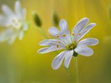 والپیپر زیبای شاخه گل سفید باکیفیت