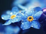 عکس گل آبی با قطرات باران