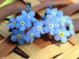 گل های آبی ریز و کوچولو