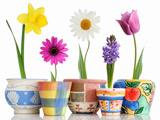 عکس گلدان گلهای زیبا
