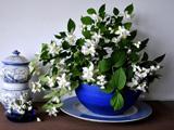 گلدان آبی چینی گلهای سفید