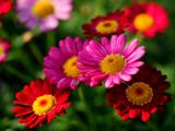 خوشگل ترین عکس گلها