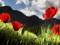 گل های شغایق