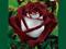 گل رز بسیار زیبا