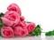 شاخه گل های رز صورتی