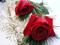 زیباترین گل های لاله قرمز جهان