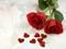 دو شاخه گل رز سرخ