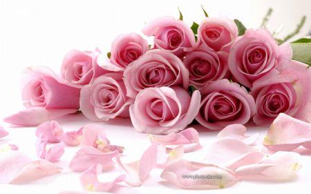 دسته گل رز صورتی زیبا beautiful roses