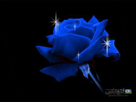 گل رز آبی با زمینه سیاه gul roze abi