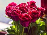 شاخه گلهای رز صورتی