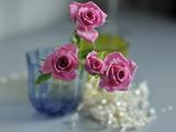 شاخه گلهای رز صورتی زیبا