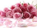 دسته گل رز صورتی زیبا
