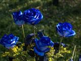 عکس شاخه گل طبیعی رز آبی