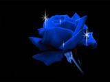 گل رز آبی با زمینه سیاه