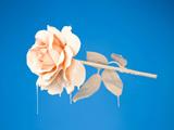 عکس شاخه گل رز شیری
