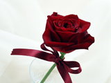 گل رز با روبان قرمز