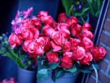 دسته گل رز بسیار زیبا
