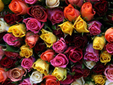 پس زمینه گل های رز رنگارنگ