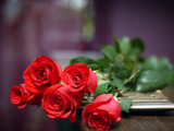 عکس شاخه گل رز طبیعی روی میز