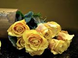 عکس گلهای رز زرد زیبا