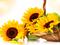 گل آفتابگردان در سبد