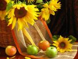 سبد گل آفتابگردان
