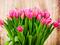 دسته گل لاله صورتی