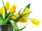 شاخه گل های لاله زرد
