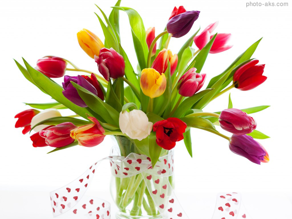 Tulip flowers Photos | Tulip flowers Image Gallery