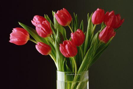 دسته گل لاله در گلدان red tulip flowers