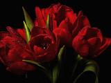 دسته گل لاله قرمز بسیار زیبا