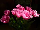شاخه گل های لاله صورتی زیبا