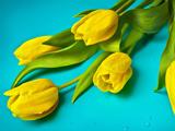 پستر شاخه گل های لاله زرد