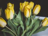 دسته گل لاله زرد زیبا