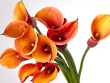 دسته گل شیپوری نارنجی