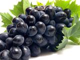 خوشه انگور سیاه