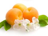 عکس میوه و گل زردآلو