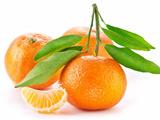 عکس میوه نارنگی