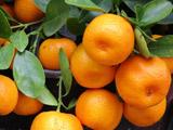 عکس میوه درخت نارنگی