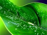 عکس برگ سبز باطراوت